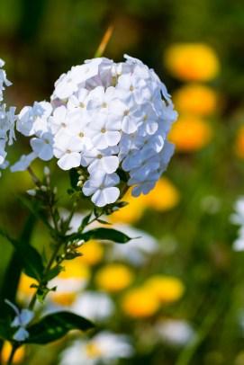 White flower sphere