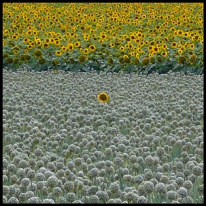 Fleurs et paysages