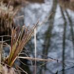 Kleiner Bach mit gefrorenem, trockenem Gras