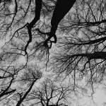 Blick in dunkle Baumkronen mit Ästen ohne Blätter