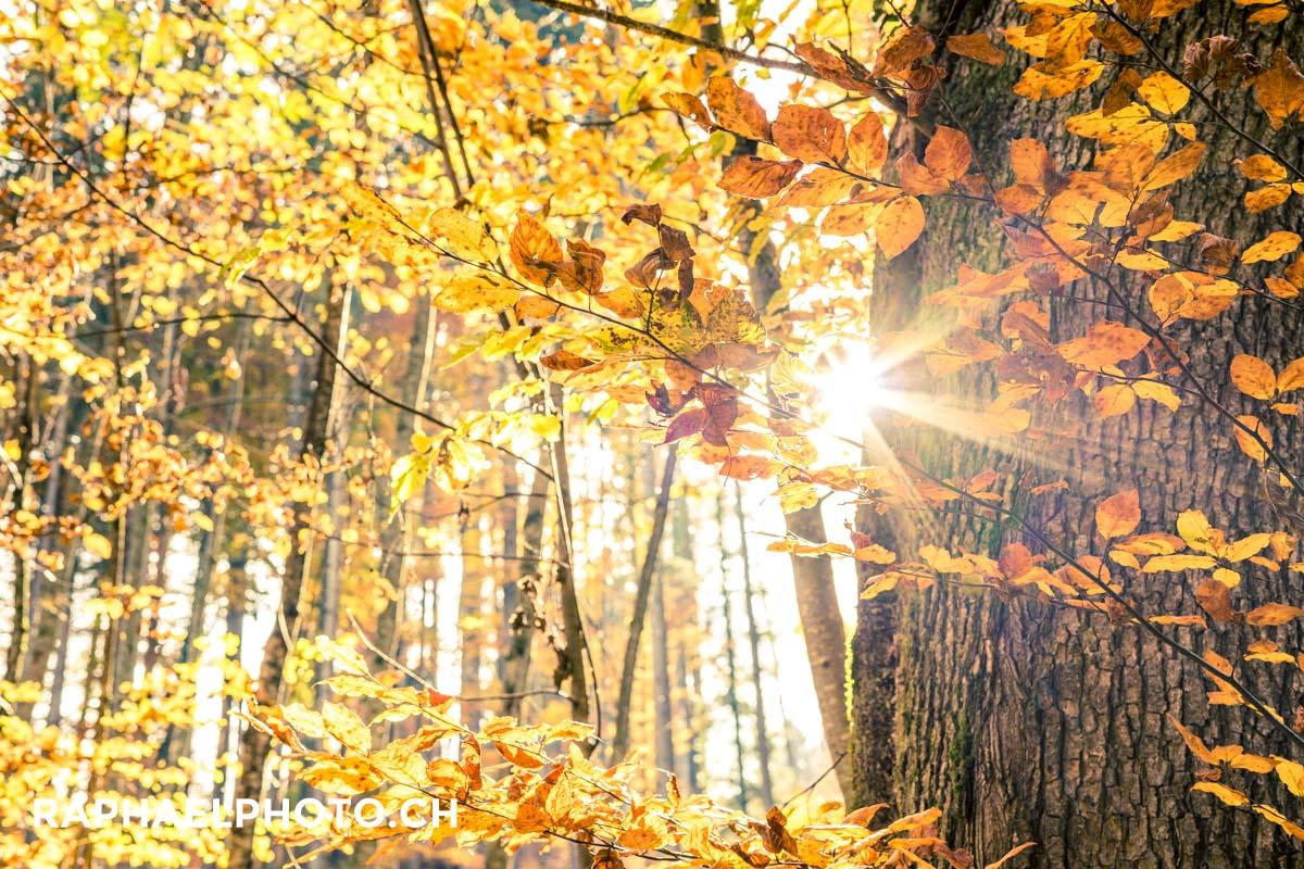 Herbstlicher Wald in Spiez