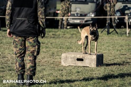 Hund Militäranlass Thun