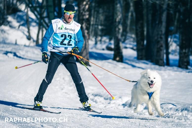 Skijöring NR. 22 Samojede