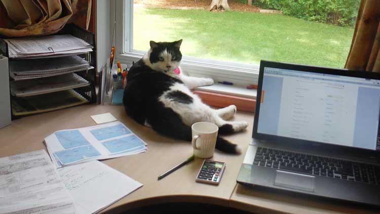 Photo d'un chat sur un bureau