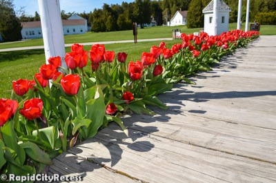 Tulips lining Fort Mackinac's entrance