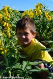 kade sunflower-2