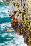 Pictured Rocks Lakeshore-cove-3