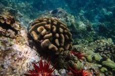Maui coral-1
