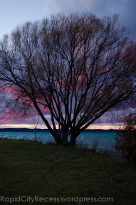 Alden Marina tree