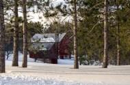 Red barns behind green pines