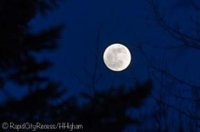 moon through trees-2