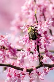 busy bee-2