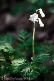 little heart flowers