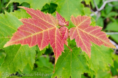 fall color in summer-2