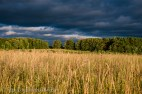 dramatic pasture