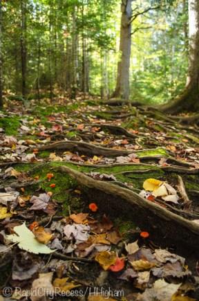 fall decorations adorn trail
