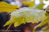 frosty Friday-4