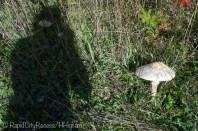 mushroom obsession