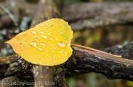 raindrops on leaves-2