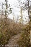 Skegemog swamp-2