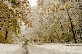 snowy fall lane