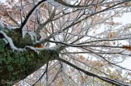 snowy maple upskirt