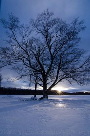 drifting tree-3