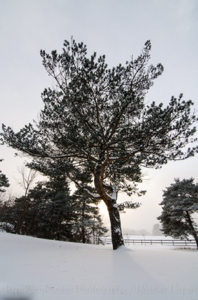 snow day-2-2