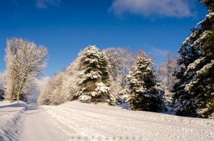 fresh snow-10