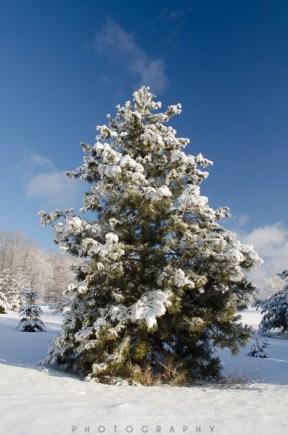 fresh snow-12
