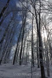 fresh snow-17