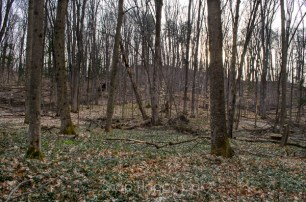 vinca and woods
