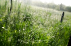 spiderweb in meadow