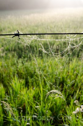 spiderweb on barbed wire-2