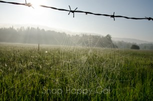 spiderweb on barbed wire fence