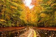 fantasy fall-8