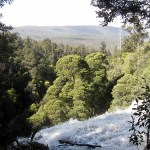 Tasmania – 60 Great Short Walks and Mt Field National Park