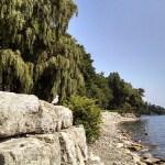 3 Toronto Suburban Gems to Avoid Carpocalypse