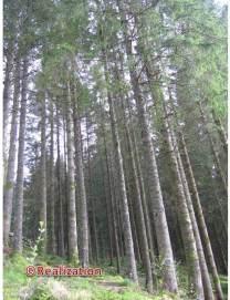 wood1_10mai14