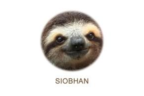 sloth, siobhan, sloth head