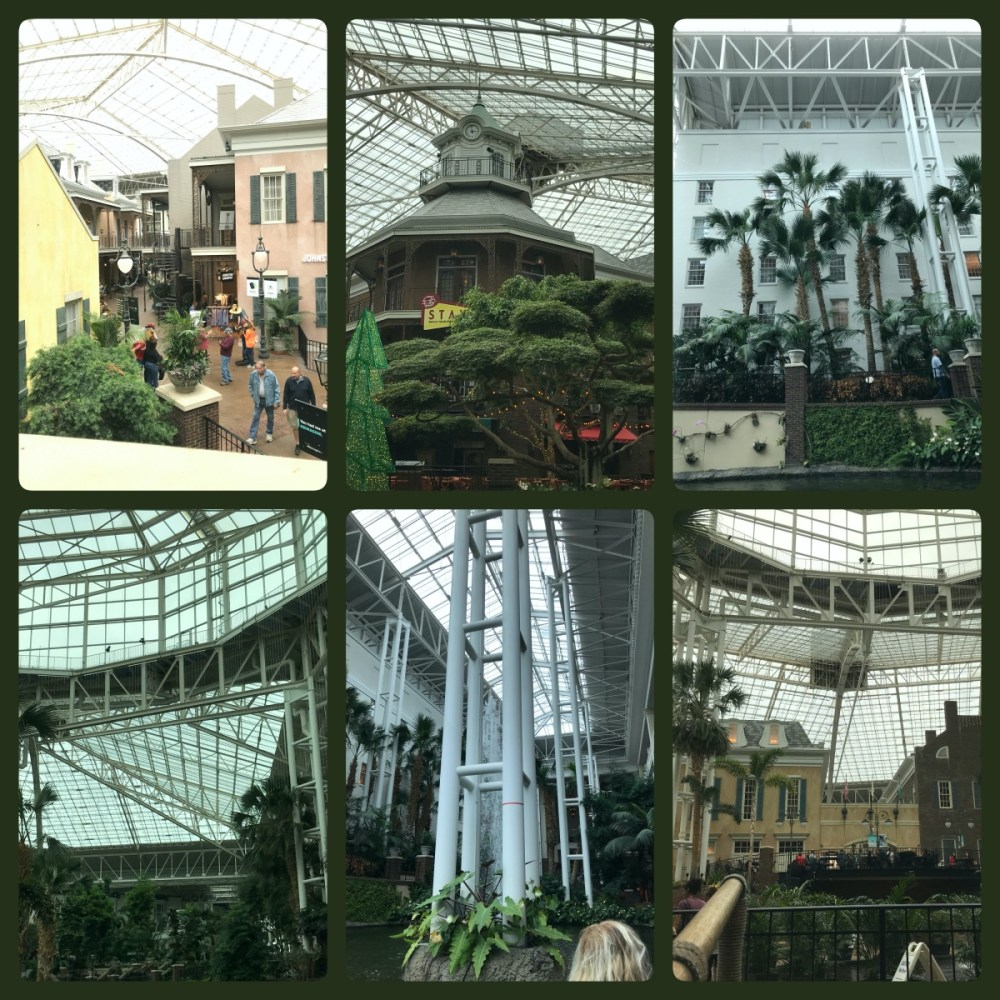 Wander the Gaylord