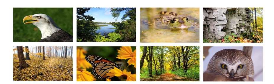 Nature pictures, eagle, river, frog, cliffs & alvars, forest, butterfly, summer forest, owl