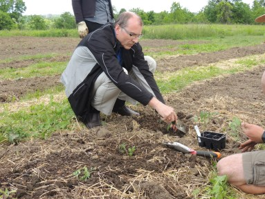 TMMC President Fred Volf planting at rare's Springbank Community Gardens. Photo by Rhiannon Hodgson