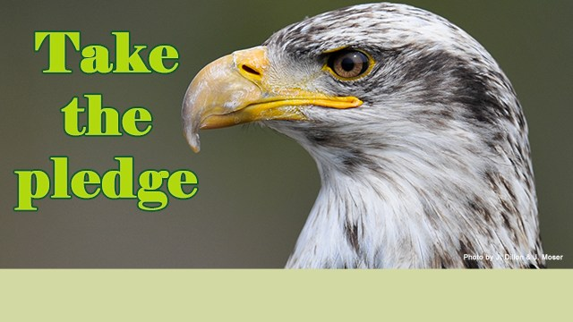 Take the pledge. Bald Eagle picture