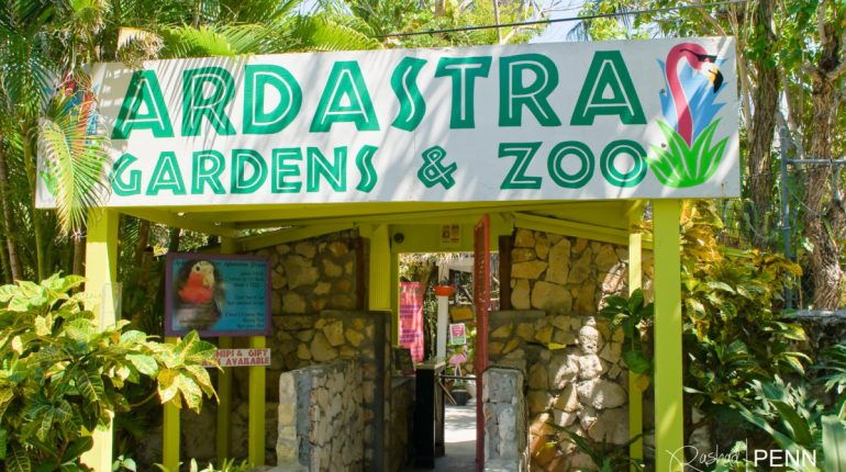 What to do in Nassau – Ardastra Gardens and Zoo