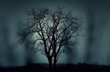 Dark, Tree