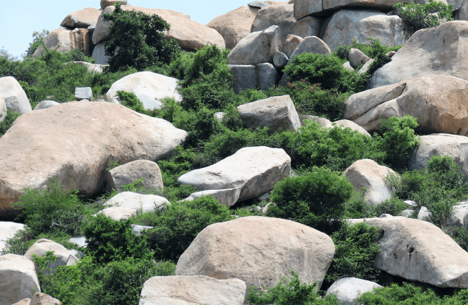 Boulders amidst greenery