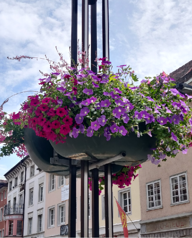 Flowers galore at the town square