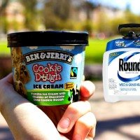Ben & Jerry's Toxic Glyphosate Ice Cream: They Also Allow Their Egg & Dairy Suppliers To Use GMO Feed