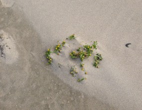 Flowers in the Beach